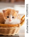 Stock photo small ginger kitten in the basket in home 751090351