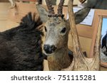 Deer Head With Beautiful...
