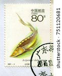 Small photo of GOMEL, BELARUS, 27 OCTOBER 2017, Stamp printed in China shows image of the Dabry's sturgeon (Acipenser dabryanus) is a species of fish in the sturgeon family, Acipenseridae, circa 2001.