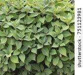 closeup background texture of... | Shutterstock . vector #751123981