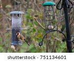 goldfinch in the garden | Shutterstock . vector #751134601