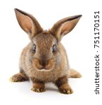 Stock photo small brown rabbit isolated on white background 751170151