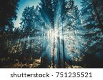 Stock photo bright sun shines through the tall trees in a forest where young couple stands 751235521