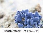 sponges  the members of the...   Shutterstock . vector #751263844