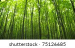 sunlight in the green forest ... | Shutterstock . vector #75126685