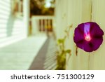 isolated violet flower on... | Shutterstock . vector #751300129