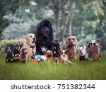 Stock photo many different breeds of dogs on the grass 751382344