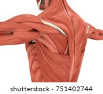 muscles of the back anatomy. 3d ... | Shutterstock . vector #751402744