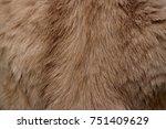 Brown Fur Of Cat