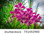Small photo of Pink Vanda orchid flowers are blooming on tree in the park