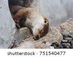 cute little otter during its... | Shutterstock . vector #751540477