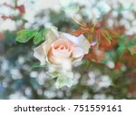 pink rose blooming with bokeh... | Shutterstock . vector #751559161