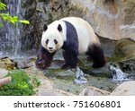 the giant panda  the white... | Shutterstock . vector #751606801