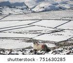 a sheep on winter farm land... | Shutterstock . vector #751630285