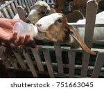 hands  are feeding in bottles ... | Shutterstock . vector #751663045