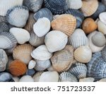 seashells of different colors.... | Shutterstock . vector #751723537