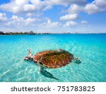 cancun beach turtle photomount... | Shutterstock . vector #751783825