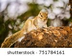 Squirrel Sitting On A Tree Wit...