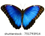 Stock photo blue morpho butterfly morpho peleides isolated on white background with wings open color 751793914