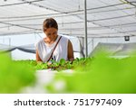 women farmer are taking care of ... | Shutterstock . vector #751797409