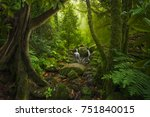 asian tropical rainforest | Shutterstock . vector #751840015