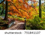 autumn landscape. autumn tree...   Shutterstock . vector #751841137