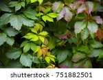 Small photo of yellow and green leaves with vibrant colors and different shades of yellow and green and abit of red