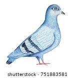 Feral Pigeon Hand Drawn...