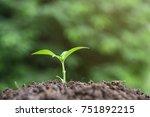 little plant growing on soil... | Shutterstock . vector #751892215