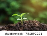 little plant growing on soil... | Shutterstock . vector #751892221