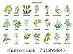 ayurvedic herbs  natural... | Shutterstock .eps vector #751893847