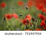 poppies | Shutterstock . vector #751947934