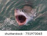 great white shark  carcharodon...   Shutterstock . vector #751973065