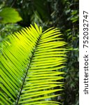 green palm leaves in the park | Shutterstock . vector #752032747