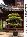 Decorative Bonsai Tree In The...