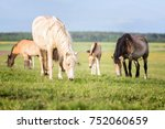 horses on the pasture   Shutterstock . vector #752060659