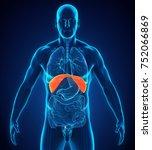 human diaphragm anatomy. 3d... | Shutterstock . vector #752066869