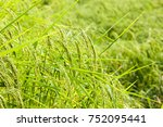 close up green and yellow rice... | Shutterstock . vector #752095441