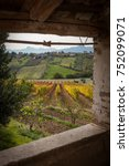 Small photo of View trow window of grape and olives field in autumn season