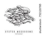 oyster mushrooms vector sketch...   Shutterstock .eps vector #752120785