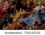 eel bornella | Shutterstock . vector #752132131