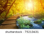 Boardwalk In The Forest ...