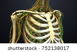 skeleton with nerves and lymph... | Shutterstock . vector #752138017
