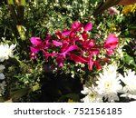 garden beautiful flowers asia... | Shutterstock . vector #752156185