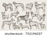 hand drawn dogs vector set.... | Shutterstock .eps vector #752196037