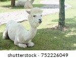 Close Up Of White Llamas Or...