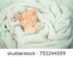 Stock photo little red kitten the kitten lies on the fluffy carpet at home little kitten sleeps close up of 752244559