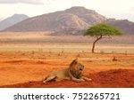 Lion Lying In Tsavo National...