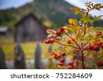 autumn scenery with rosehip and ...   Shutterstock . vector #752284609