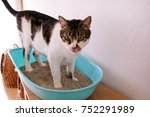 Stock photo cat using toilet cat in litter box for pooping or urinate pooping in clean sand toilet a cat 752291989